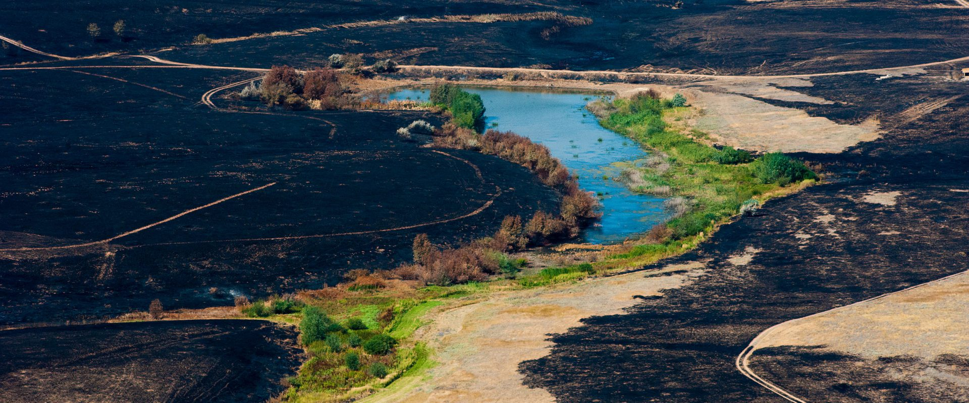 Scorched trees and grass after the fire. Aerial view. Landscape